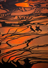 Tiger Mouth Rice Fields,Yunnan