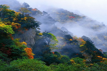 Forests,Baoxing,West Sichuan