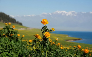Sayram Lake Flowers,West Xinjiang
