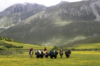Tibetan Horseback Holiday in Kham,West Sichuan