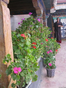 Nice Tibetan House Courtyard with Flowers