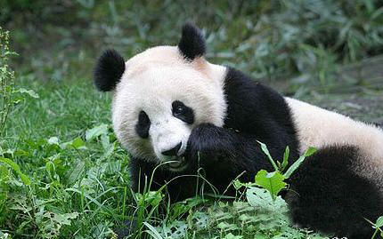 Wujiao Panda Nature Reserve, one of the 'top 10 panda habitats in China' by China.org.cn.