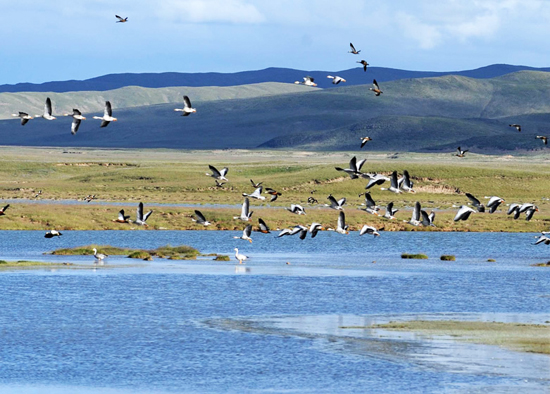 Sanjiangyuan National Nature Reserve, one of the 'top 10 attractions in Qinghai, China' by China.org.cn.
