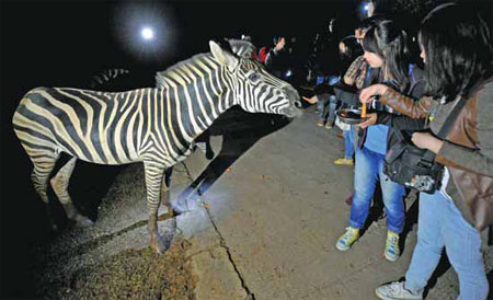 Park's night tours offer tourists a wild night out