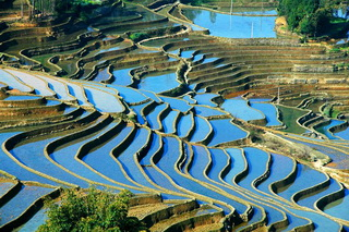 Terraced Rice Fields at Yunnan,China